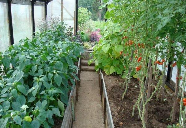 Разные растения в одной теплице